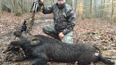 Wild Boar hunt Stacy Kueber
